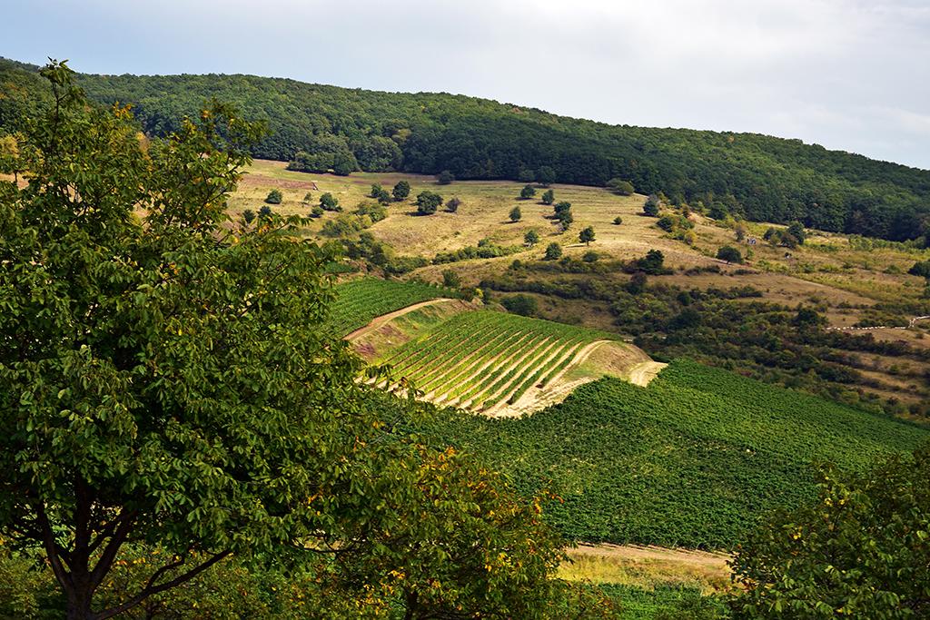 https://www.karpaten-offroad.de/wp-content/uploads/2018/05/food-wine-image-03.jpg