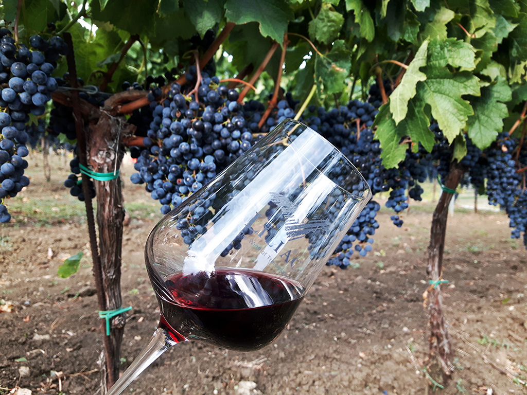 https://www.karpaten-offroad.de/wp-content/uploads/2018/05/food-wine-image-05.jpg