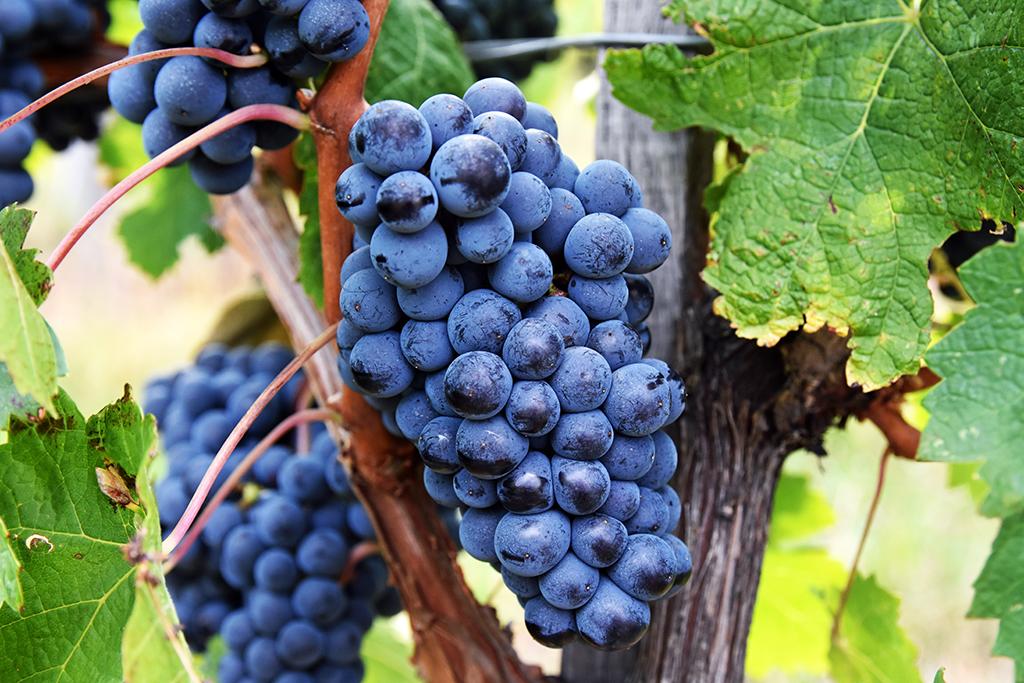 https://www.karpaten-offroad.de/wp-content/uploads/2018/05/food-wine-image-21.jpg