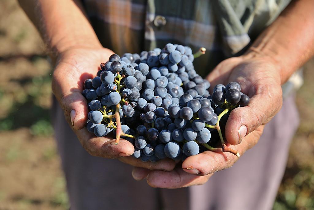 https://www.karpaten-offroad.de/wp-content/uploads/2018/05/food-wine-image-38.jpg